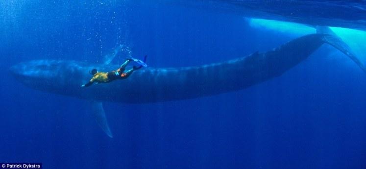 blue whale sri lanka
