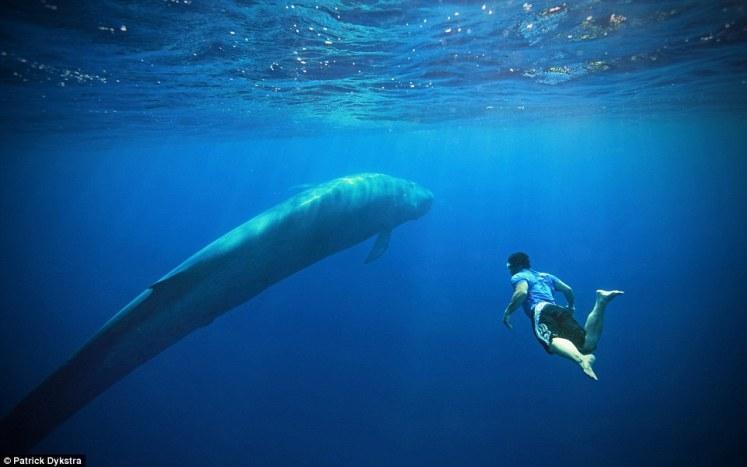 blue whales sri lanka
