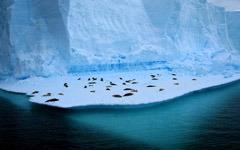 Living on Ice wallpaper
