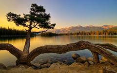 High-resolution desktop wallpaper Tarantula Tree by TheReal7