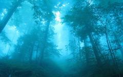 High-resolution desktop wallpaper Blue Forest by ivand101