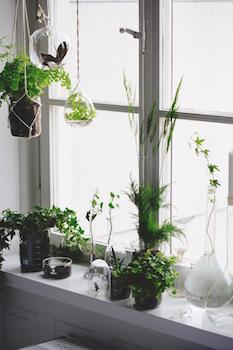 窓辺を観葉植物でおしゃれにコーディネートした画像