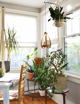 固め置きでコーナーを観葉植物でおしゃれにコーディネートした画像