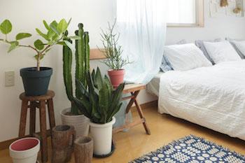 寝室のお部屋に観葉植物をディスプレイした画像