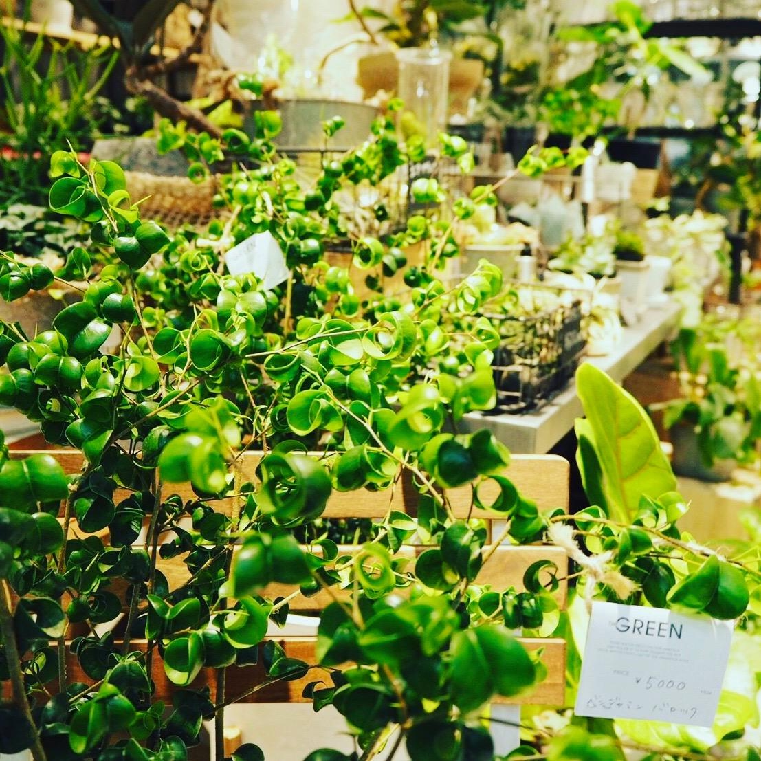 <span>Plants</span>