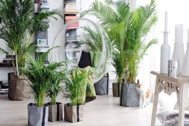 Jenis tanaman hias dalam ruangan