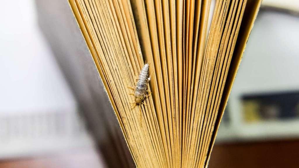 zilvervisjes insecten boek