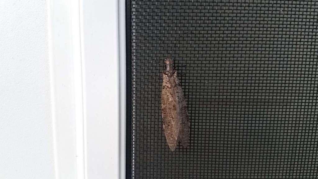 insecten uit huis