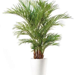 Areca Lux - plante artificiale, plante lux