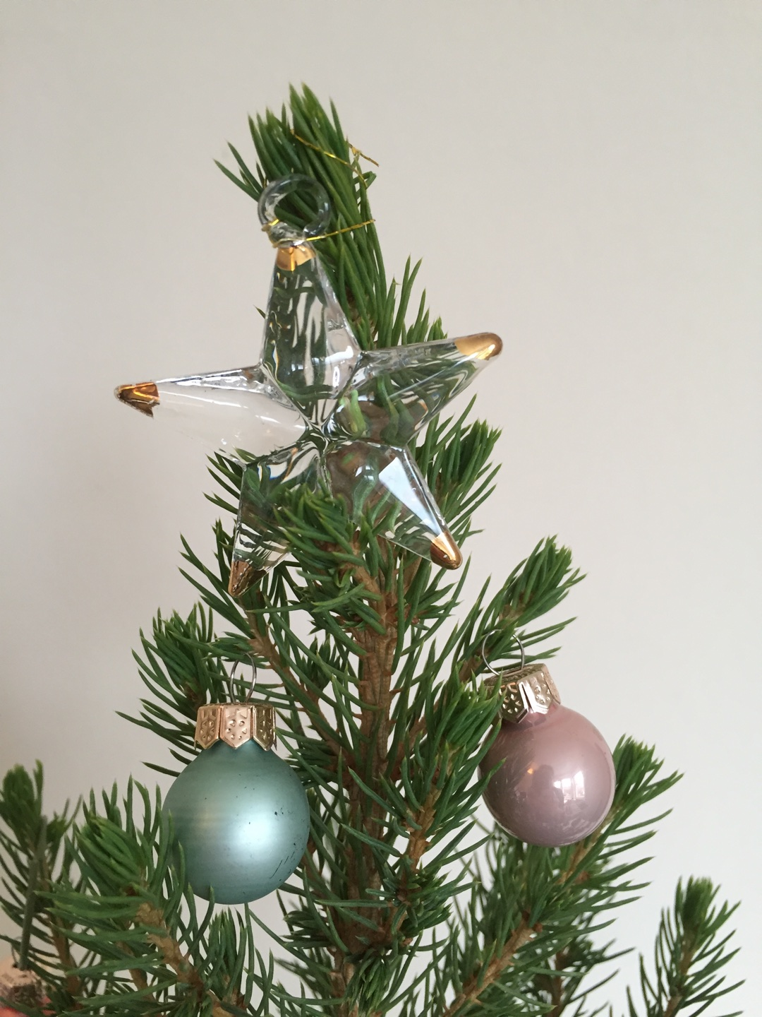 Star 1 Bloom and Wild Christmas Tree