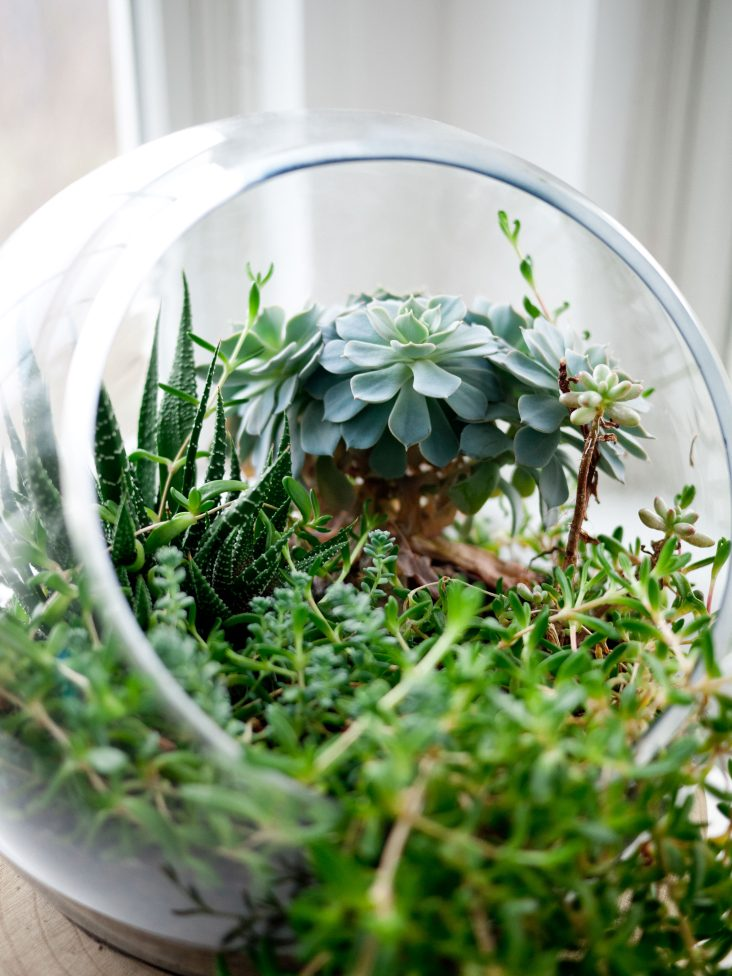 Jungle in a jar ohh