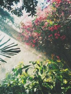 Mood of the jungle
