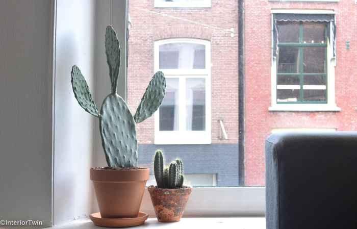 cactus in terracotta pot