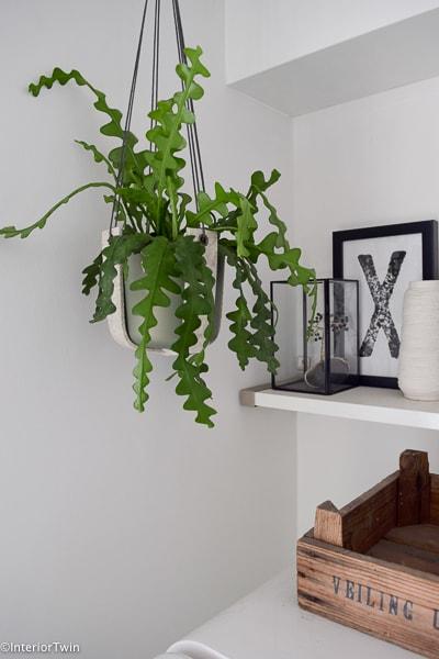 plantenhanger by LEef met de zaagcactus