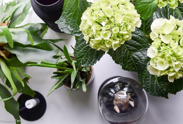 witte hortensia bovenaf