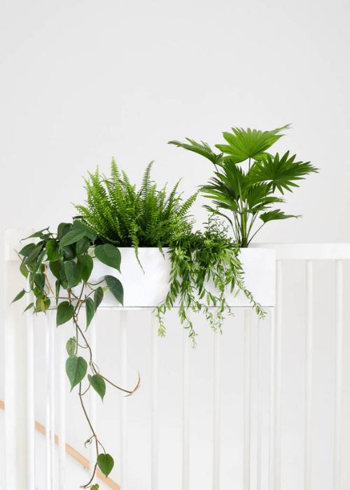 philondendron scandens hangplanten in plantenbak