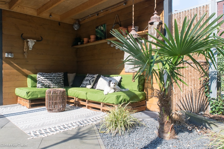 palmboom in tuin
