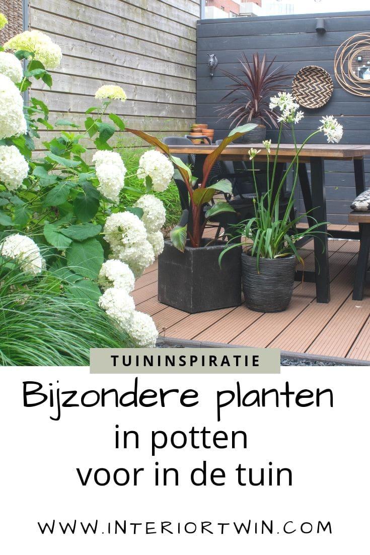 bijzondere planten in potten in de tuin