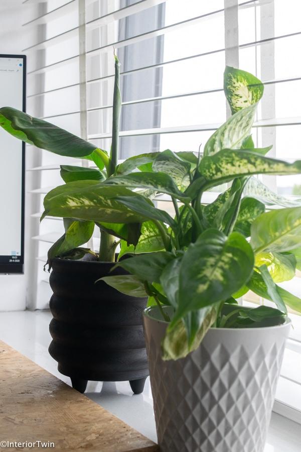 plantjes kwekers goedkoop