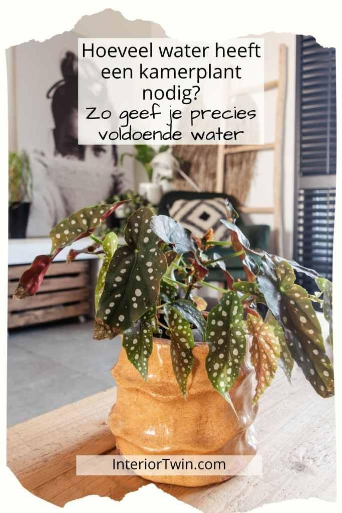 hoeveel water heeft een kamerplant nodig