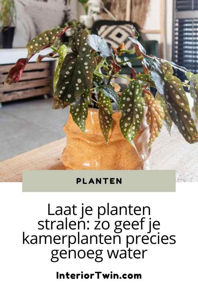 kamerplanten precies genoeg water geven