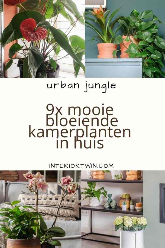 bloeiende kamerplanten in huis