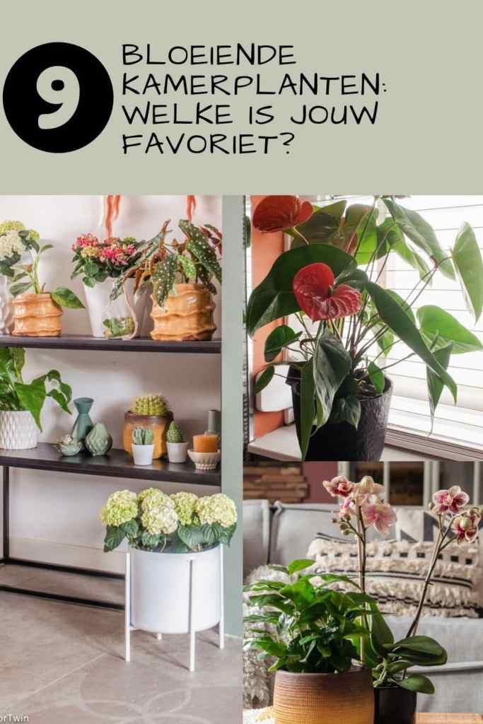 favoriete bloeiende kamerplanten