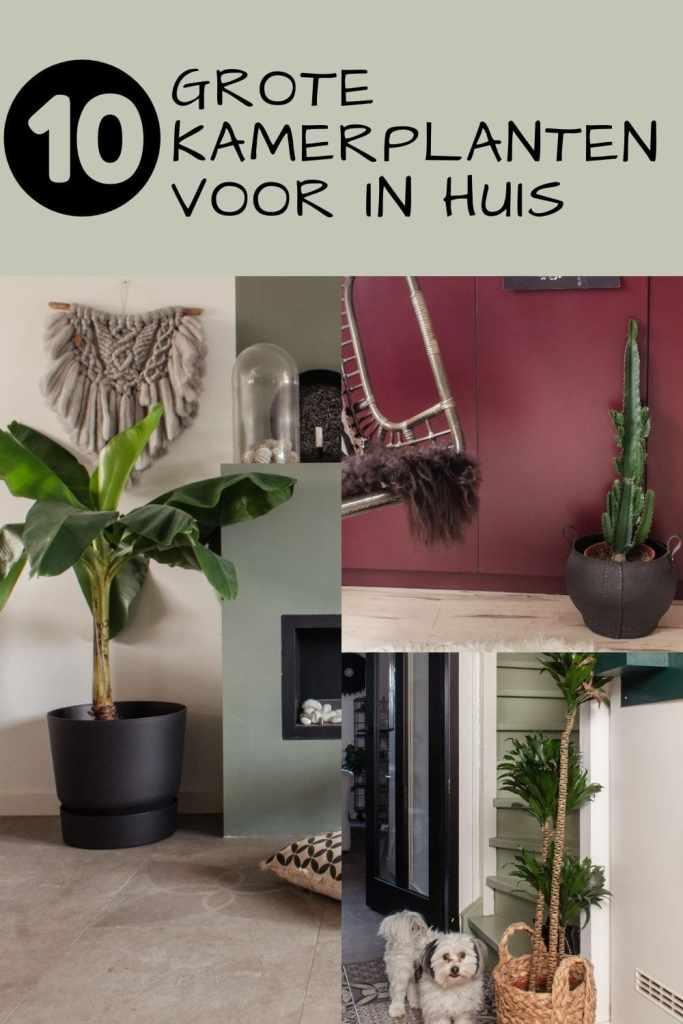 voorbeelden grote kamerplanten binnen