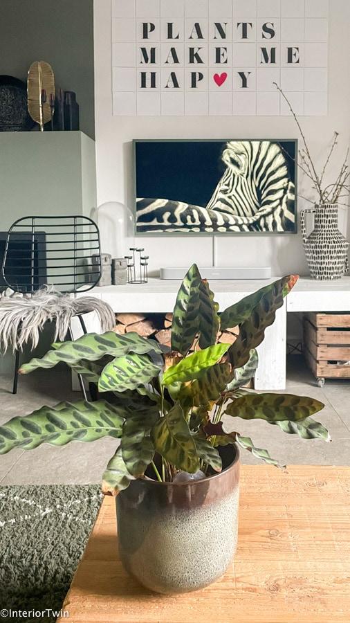 schaduw plant