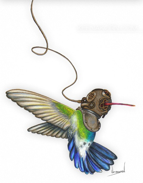 hummingbird colored pencil watercolor keena wolff
