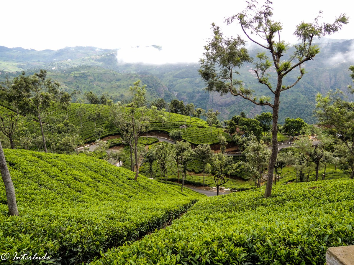 A Guide to Road-tripping Across Nilgiris - Ooty & Coonoor
