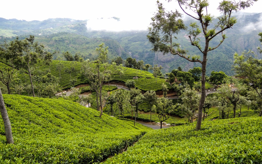 A Guide to Road-tripping Across Nilgiris – Ooty & Coonoor