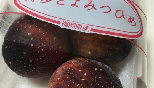 今年食べたいちじくベスト3。枡井(マスイ)ドーフィン。とよみつひめ。蓬莱柿。