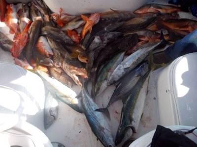 San Clemente Island Report - 03-07-15 Gopro Vid | Bloodydecks