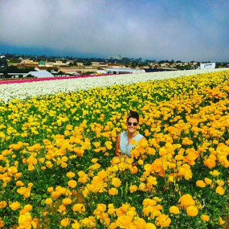 Carlsbad Flower Field 2017