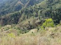 Believe It Or Not, Deforestation in Haiti Is Not About Trees