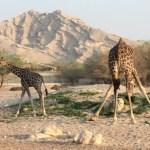 The Al Ain Animal park