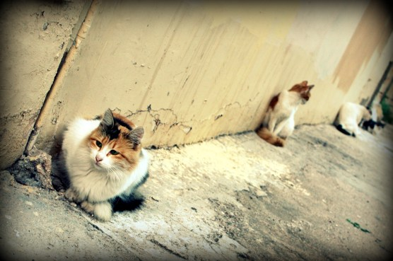 Cats of Athens