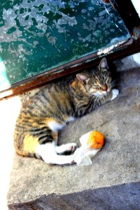 A street cat outside thePort Louis fish market
