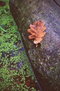 Leaf on a log
