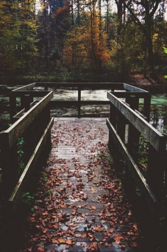 dock in the woods