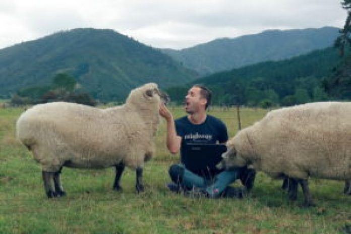 Getting to know the sheep at Smiths Farm Holiday Park