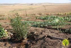 June images from our Make Rojava Green Again campaign