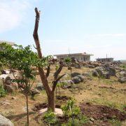 trees02