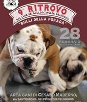 9º Raduno del Club dei Bulldog Inglesi Brianzoli: il 28 febbraio