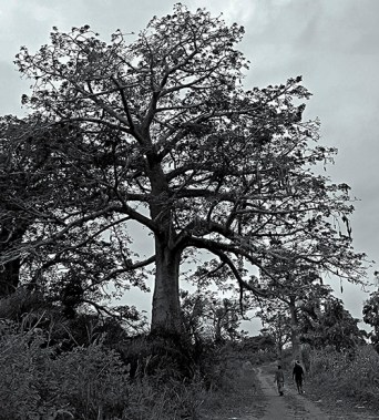 """baobab where is"" Riccardo Chiuzzi © 2016 form not published art works of ""and yet in so little 2010"""