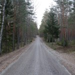 A lonely road in the deep forest of Estonia.