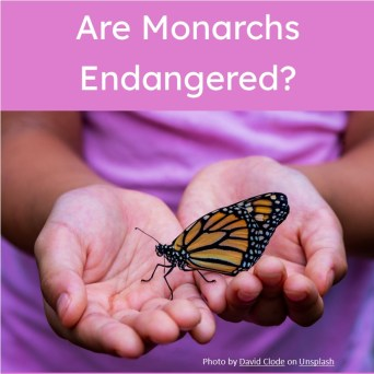 A child holds a monarch butterfly is the link to an article for an SAT reading practice passage