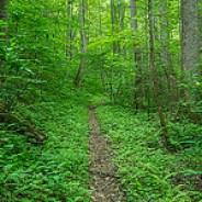 Dense Forest Boogerman Trail