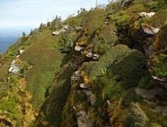 Cliff Top Vegetation